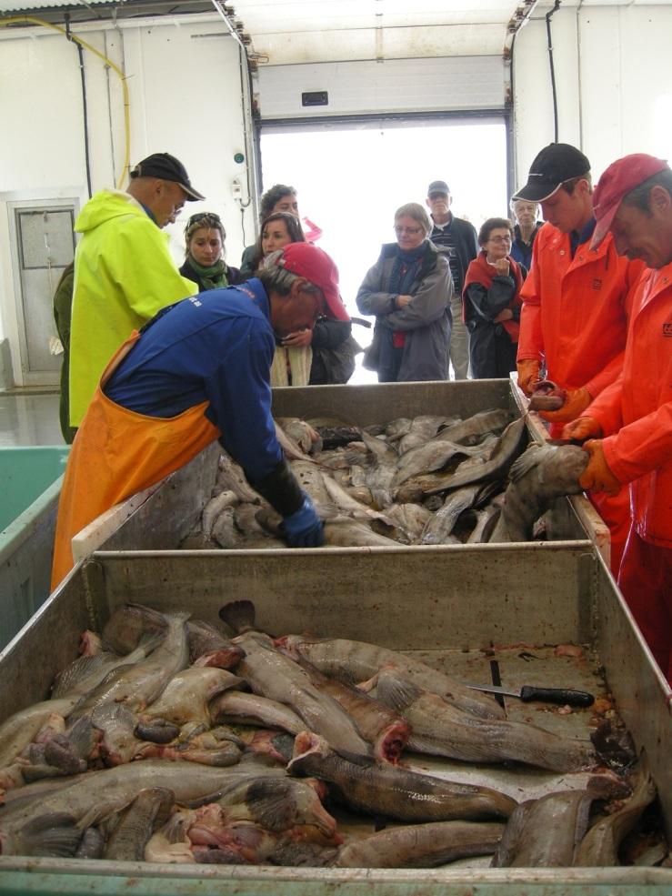 Ei global næring: Utenlandske og norske forskere ser på at brosma fra Norge bearbeides av arbeidere fra utlandet.