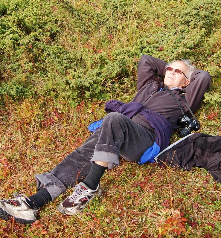 I gress og lyng på Senja, 2008. (Foto: Hilde Kat. Eriksen).